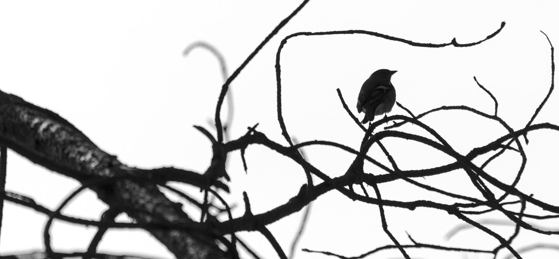 Bird Silhouette BlackandWhite by Avram Silberztein
