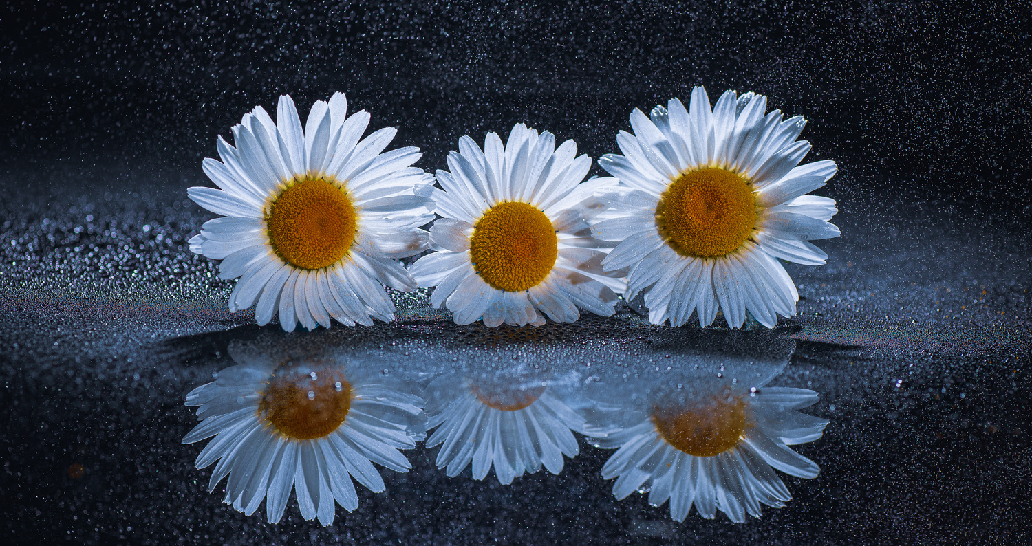 Well Isn't that a Daisy by Mona Walsh