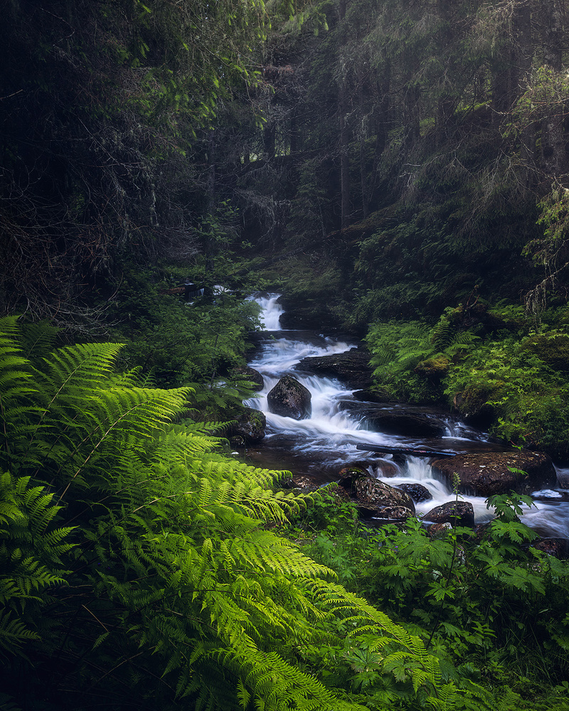 Welcome to the jungle by Fredrik Strømme