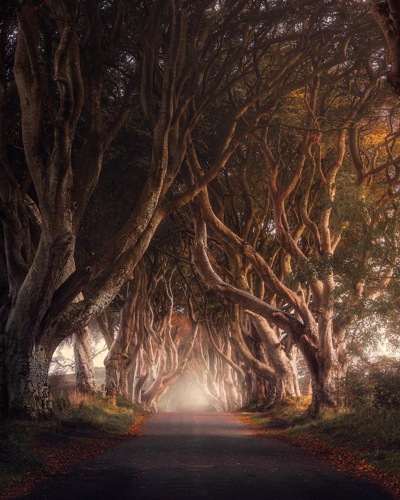 Autumn at the Dark hedges by Fredrik Strømme