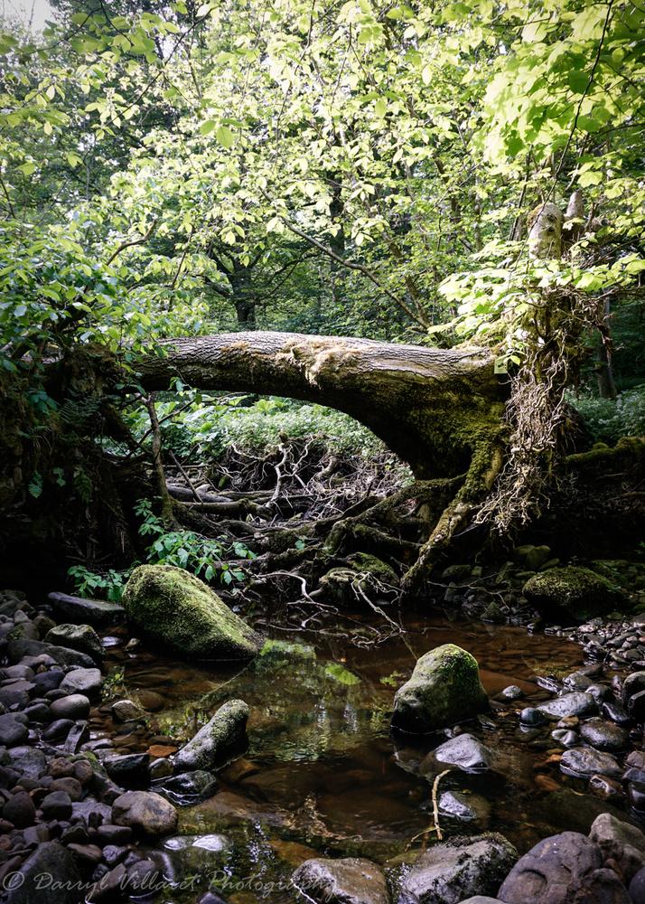 Secret nook - Teesdale by Darryl Villaret
