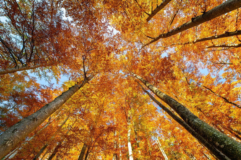 Under the autumn canopy by Tadej Žlahtič
