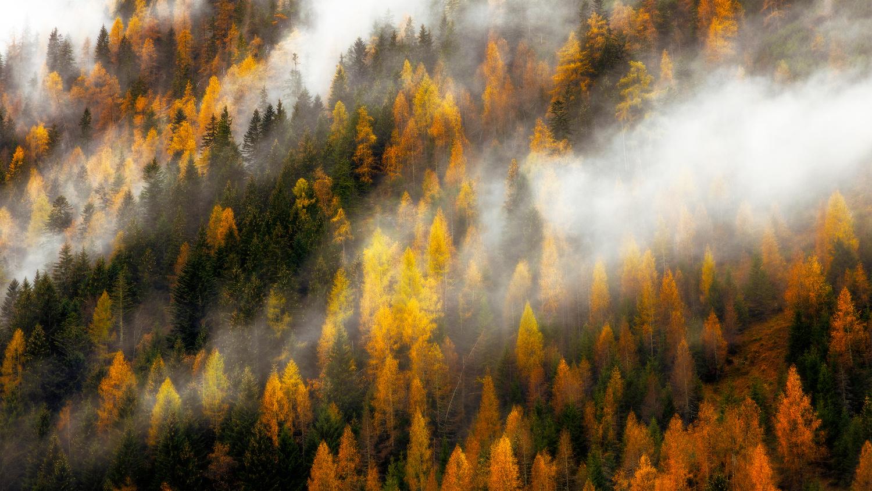 Autumn forest by Tadej Žlahtič