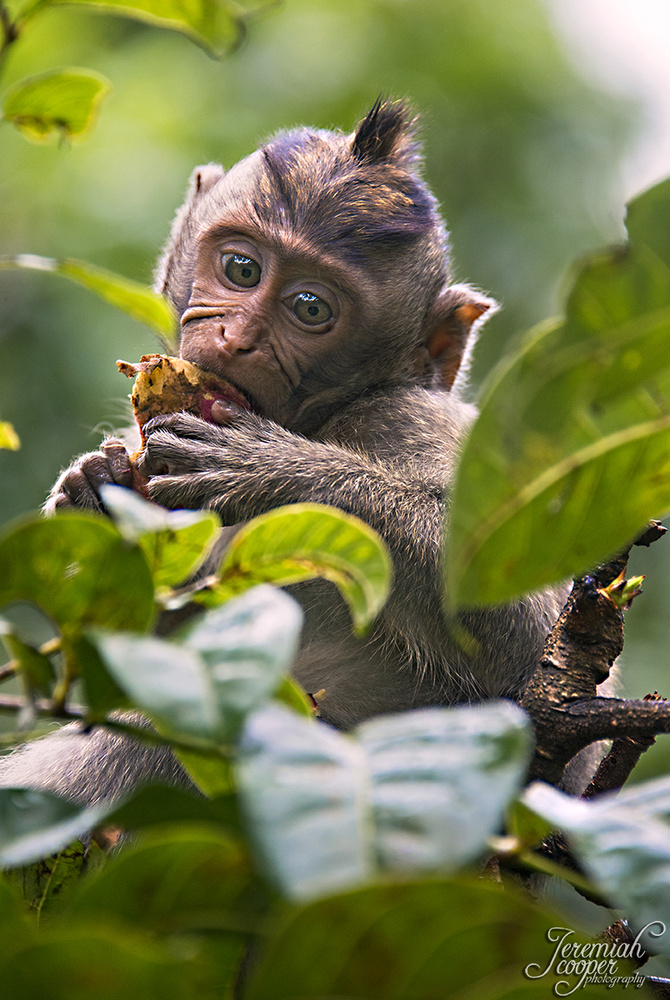 Hungry baby monkey by Jeremiah Cooper