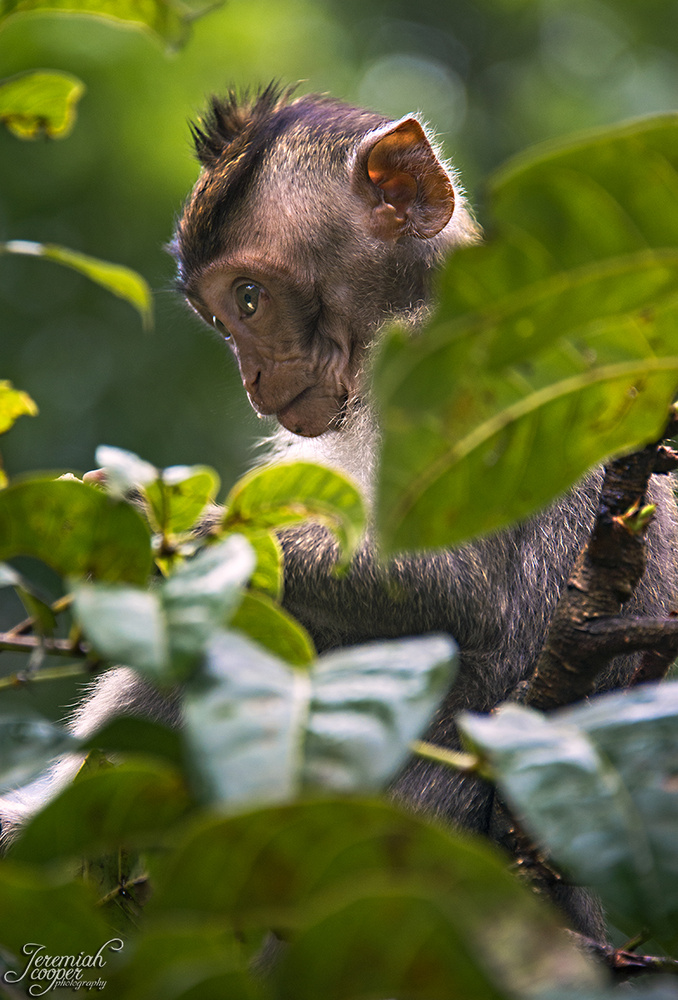 Curious baby monkey by Jeremiah Cooper