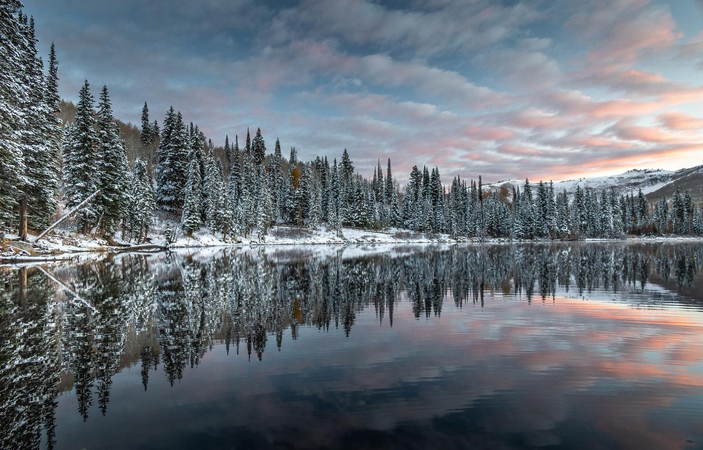 Pine Reflection by Brandon Montrone