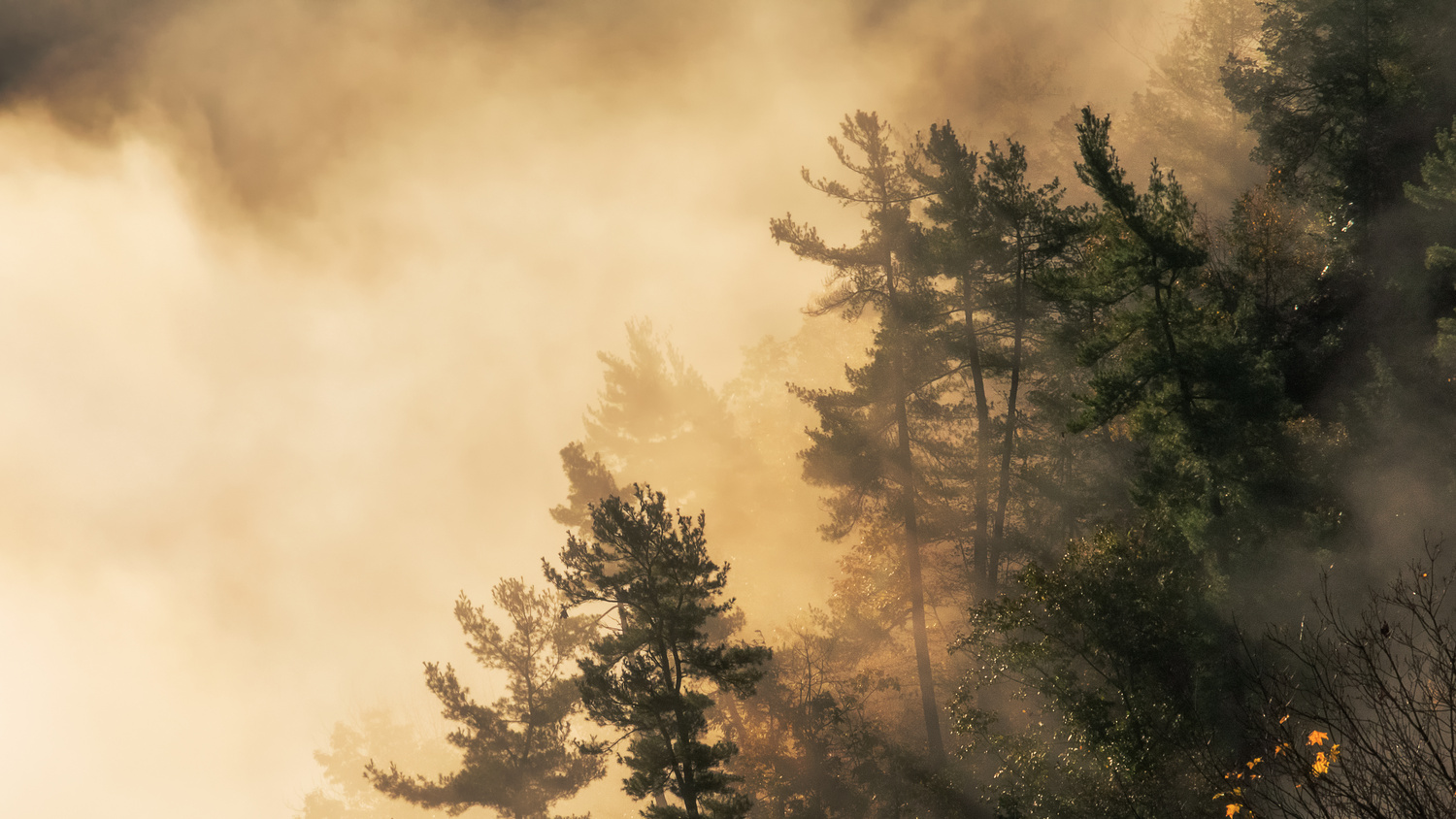 Foggy Pines by Mike English