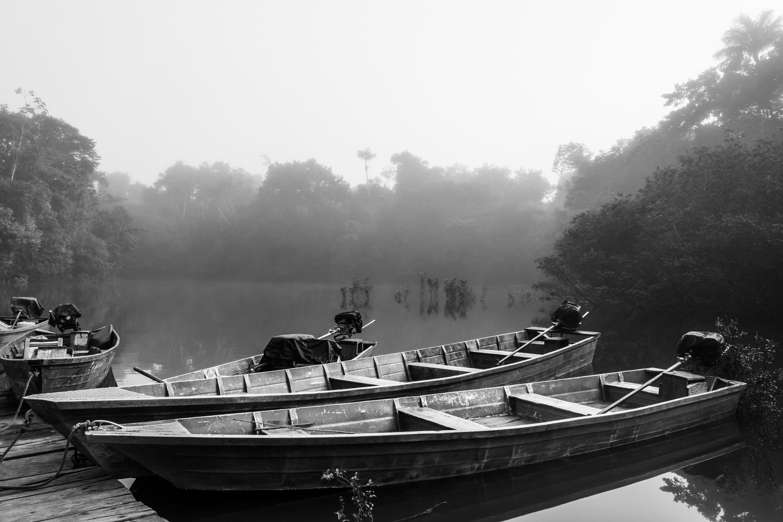 Amazon No.1 by Calin Casian