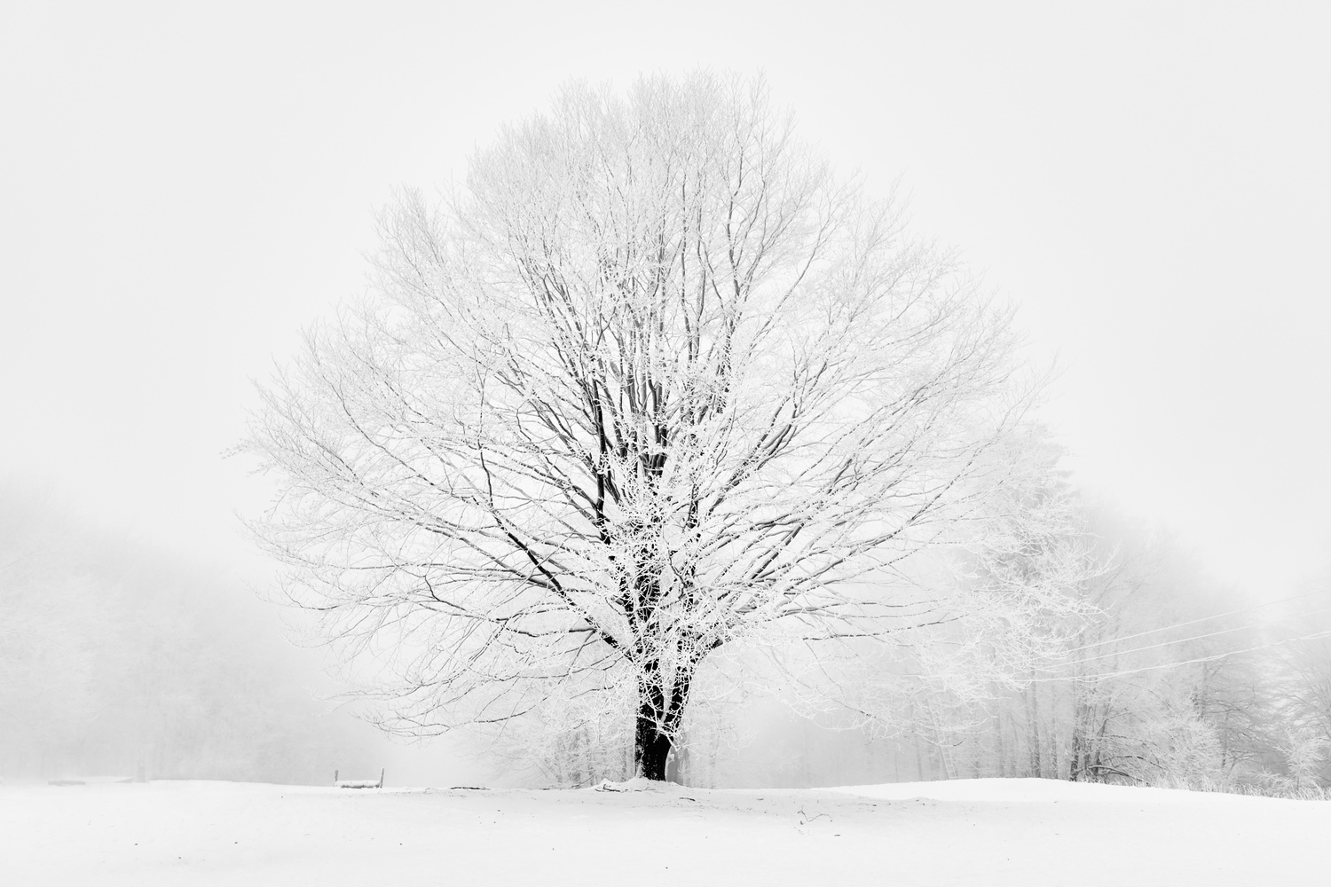 Contrast by Zsolt Seres