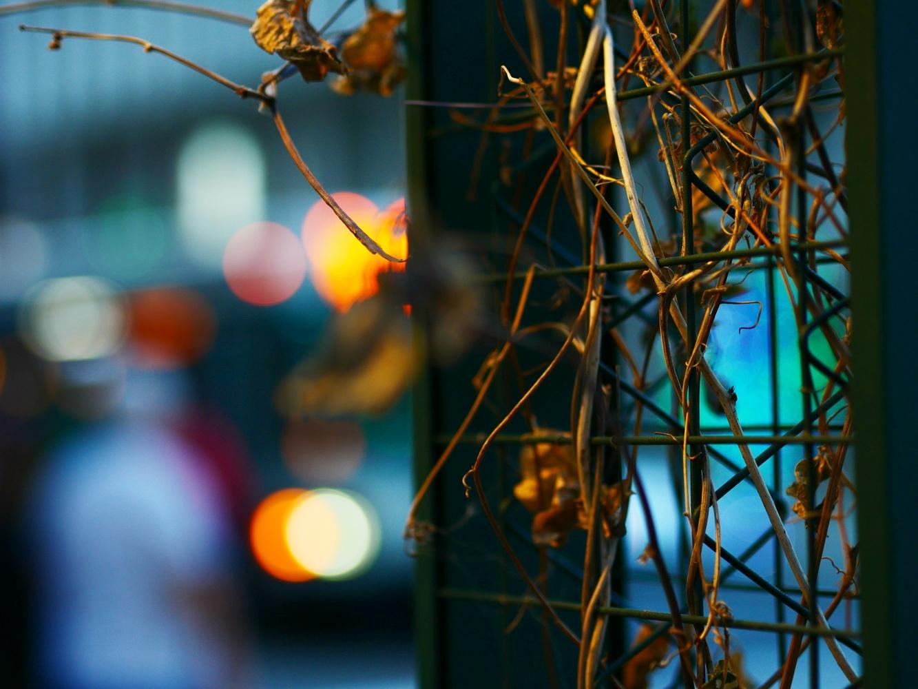 City vine by Thomas Androxman