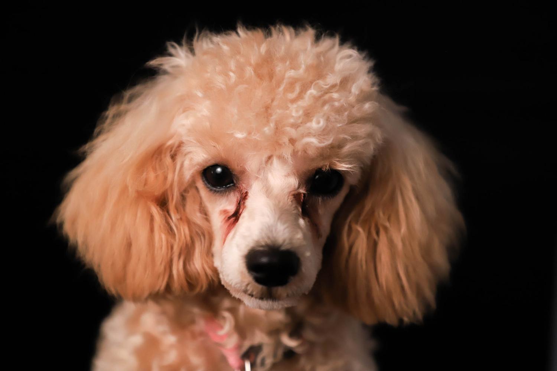 Pup Headshot by Kelsie Underwood