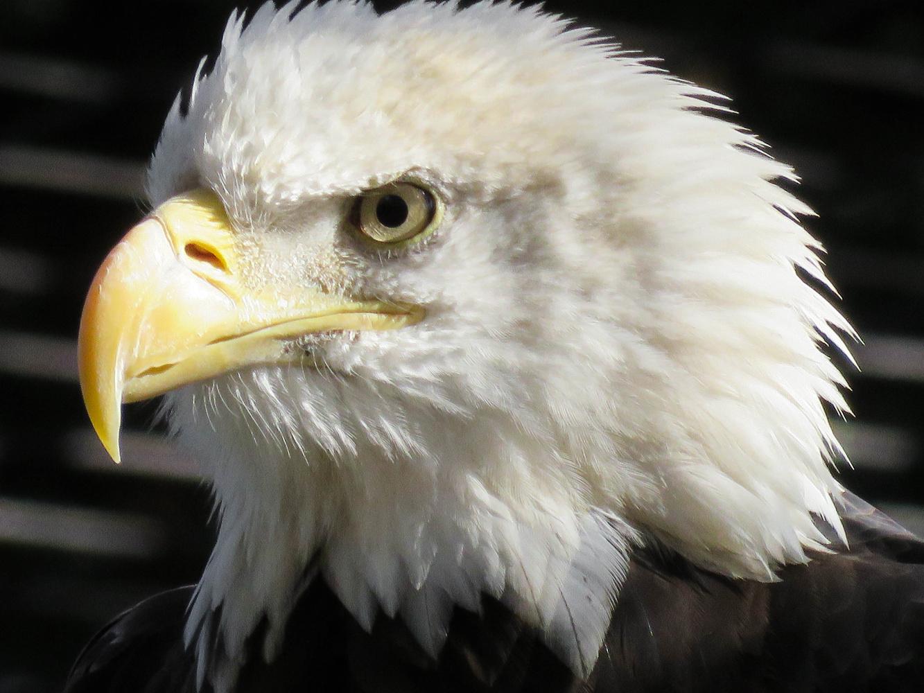 Eagle Eye by Kelsie Underwood