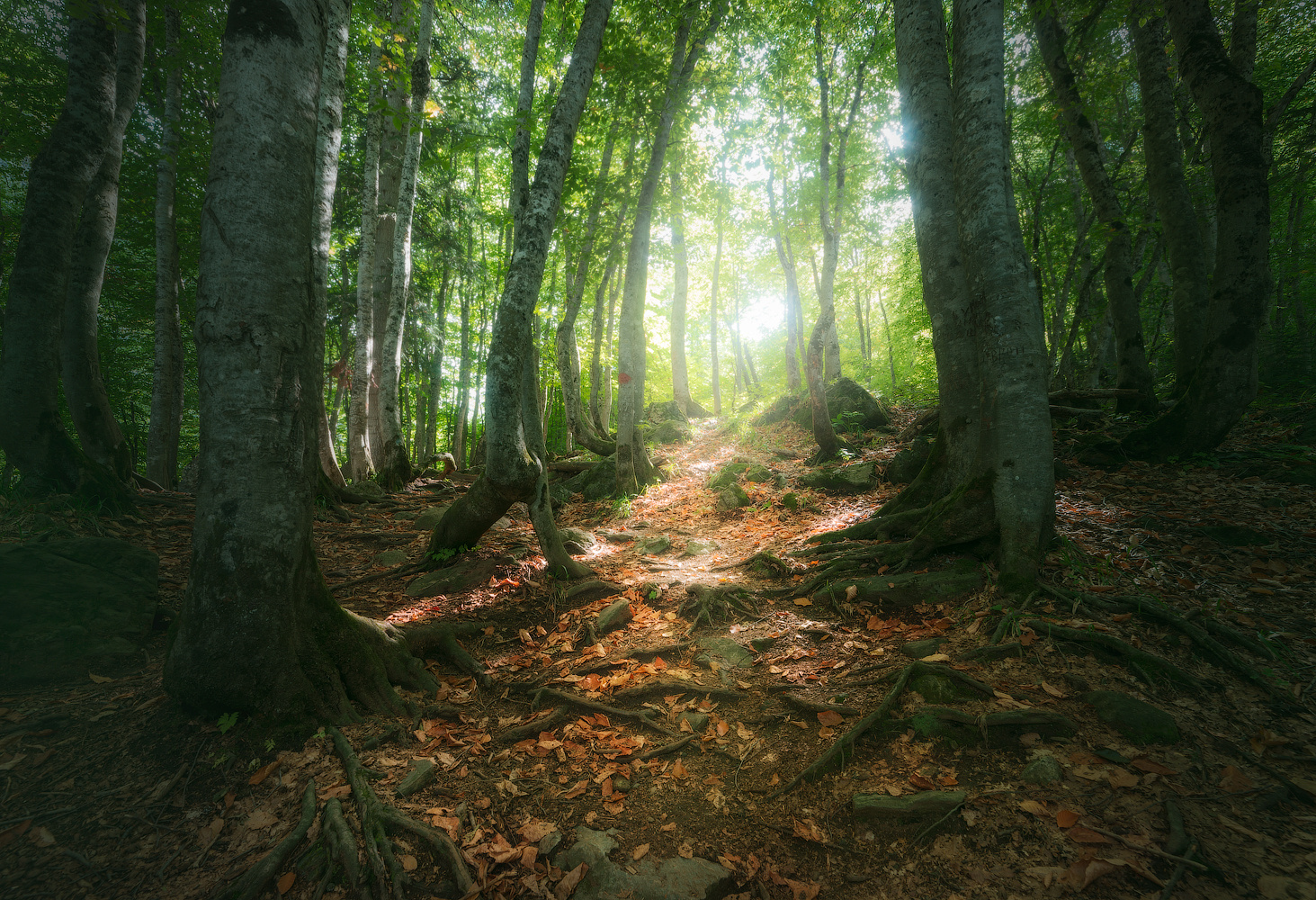 Dombay forest by Dima Vorontsov
