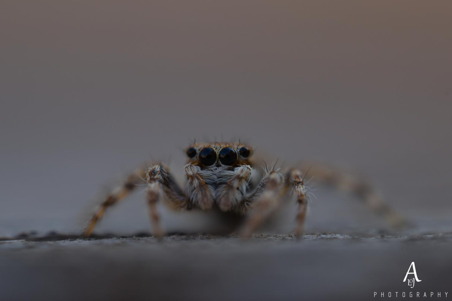 The spider looks at the camera. by Aljo Antony