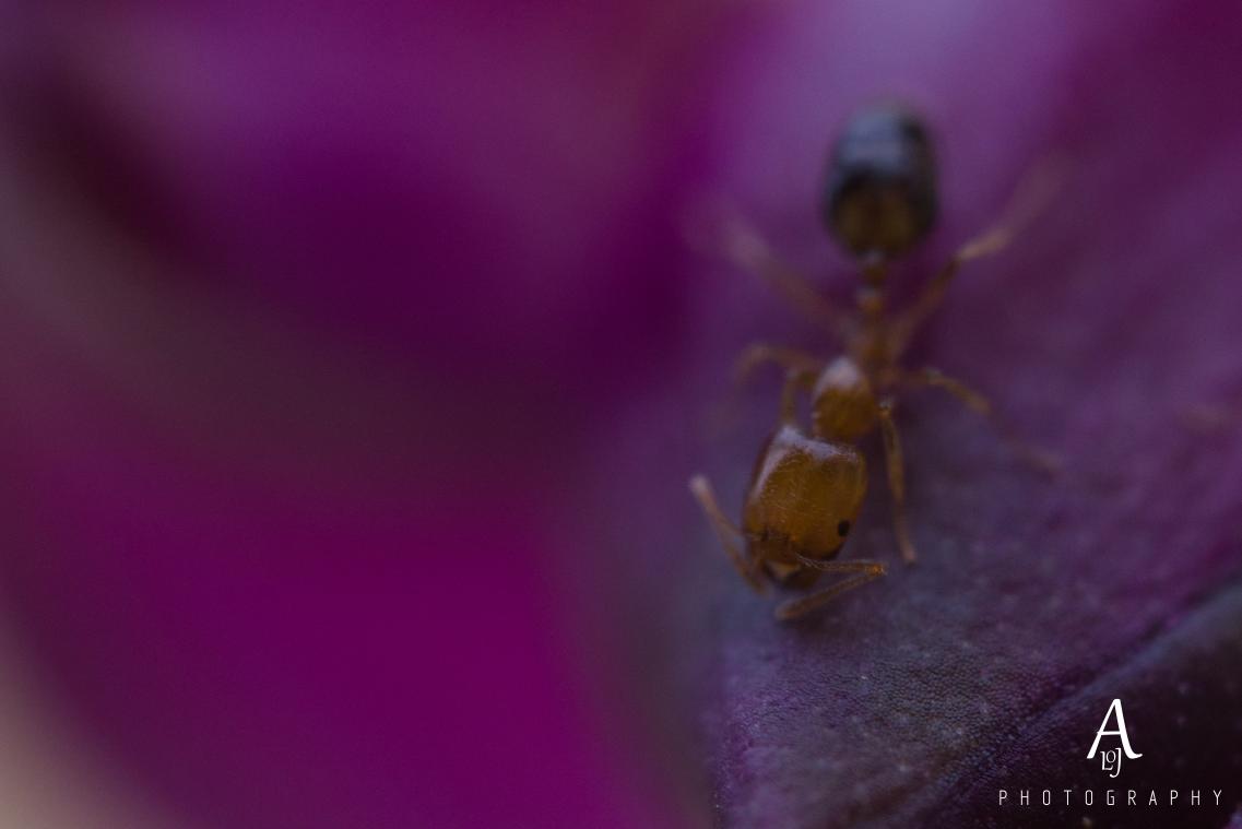 Ant on a flower bud. by Aljo Antony
