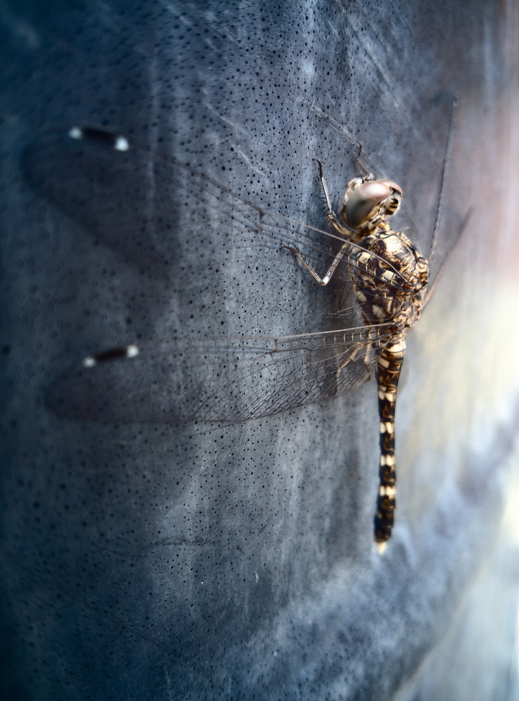 Dragonfly. by Aljo Antony