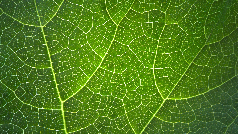 Veins of a leaf. by Aljo Antony