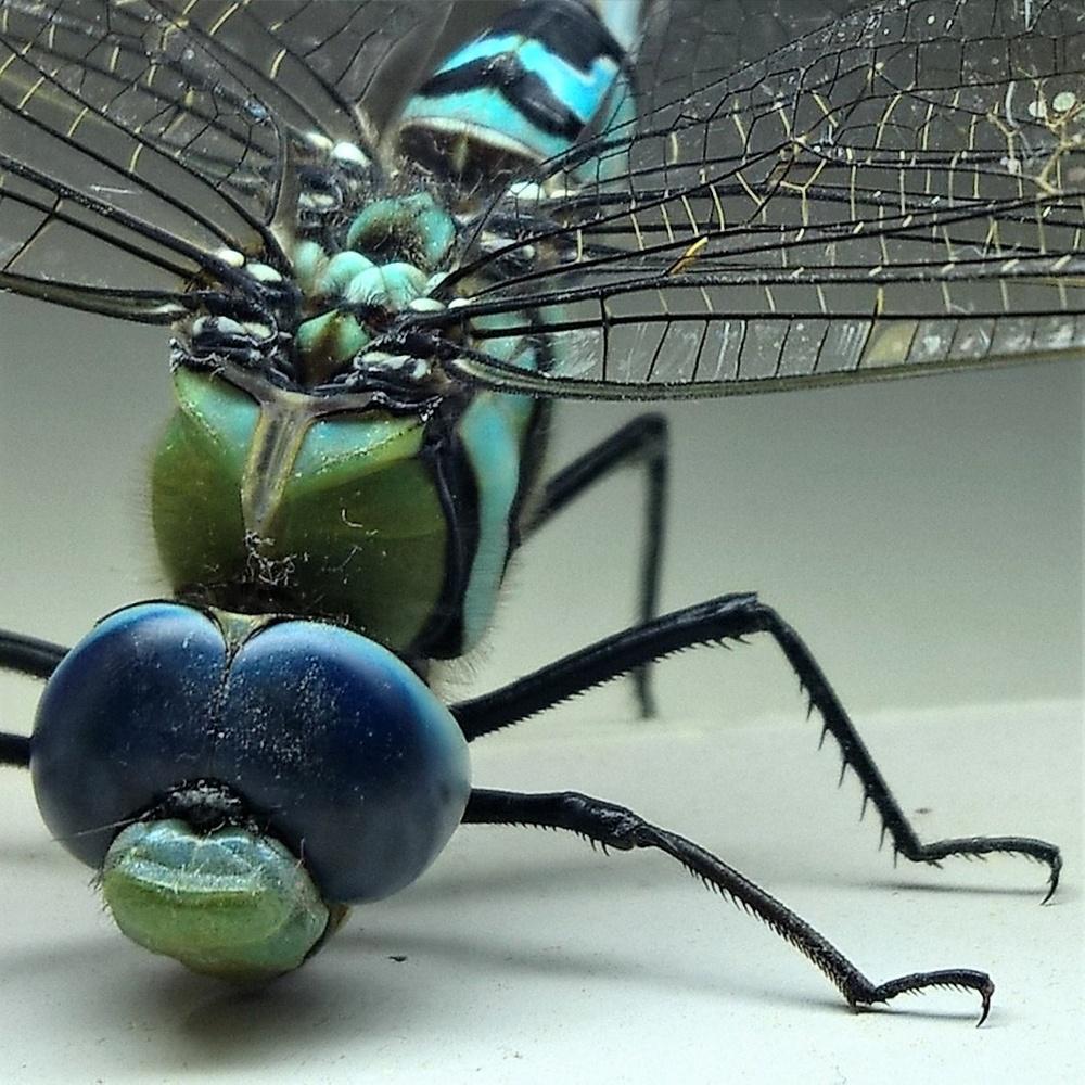 A dragonfly. by Aljo Antony