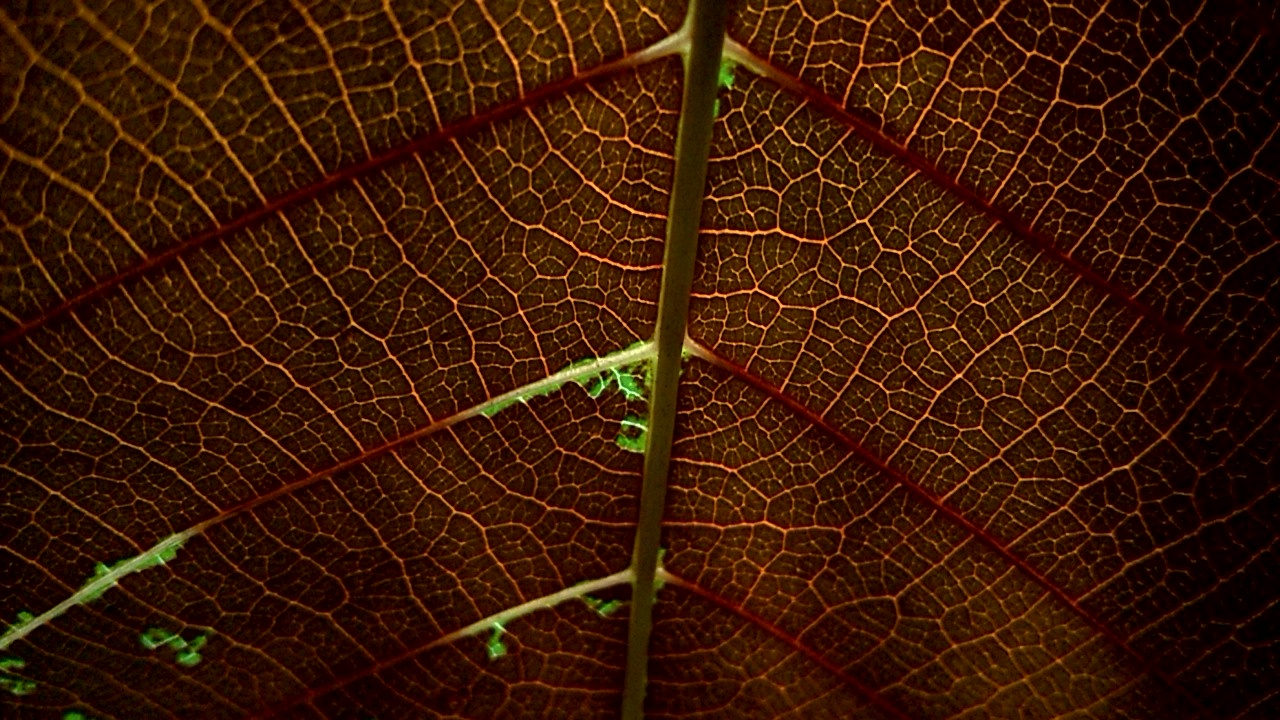 The veins of a leaf. by Aljo Antony