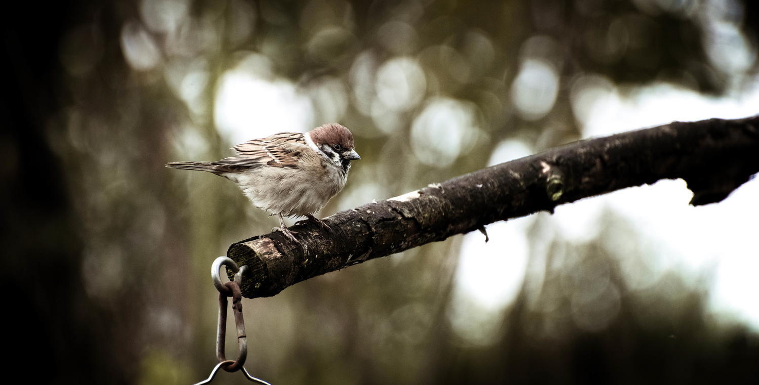 Small birds of The UK by Christopher Cosby