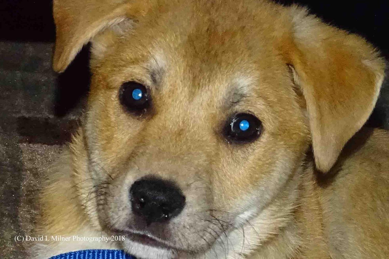 A Little Puppy by David Milner