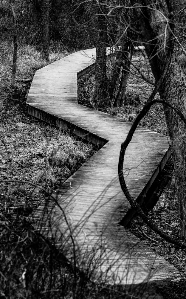 Winding Walk by Dave Haynie