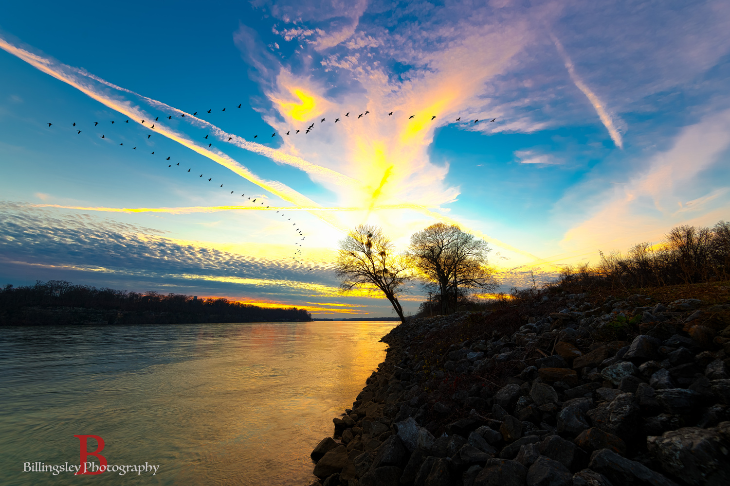 Large Flock of Geese Fly Over at Sunset by Cliff Billingsley