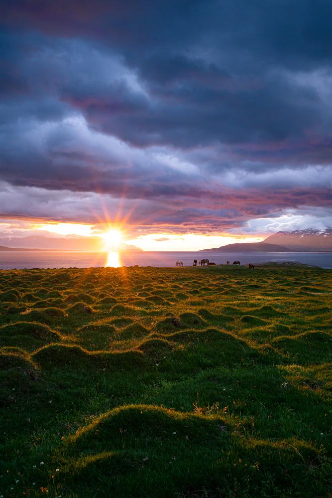 Icelandic horses at sunset by Maciej Karpinski