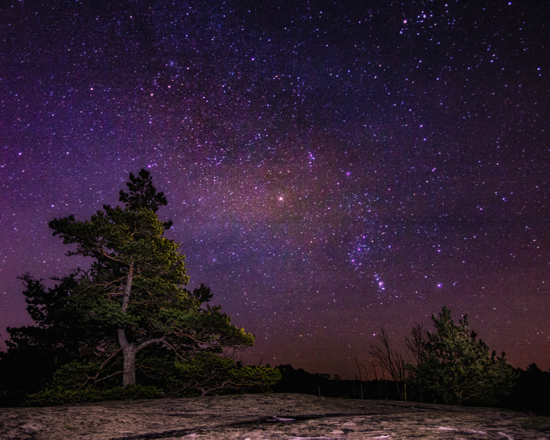 Stars and Trees by Ville Saarinen