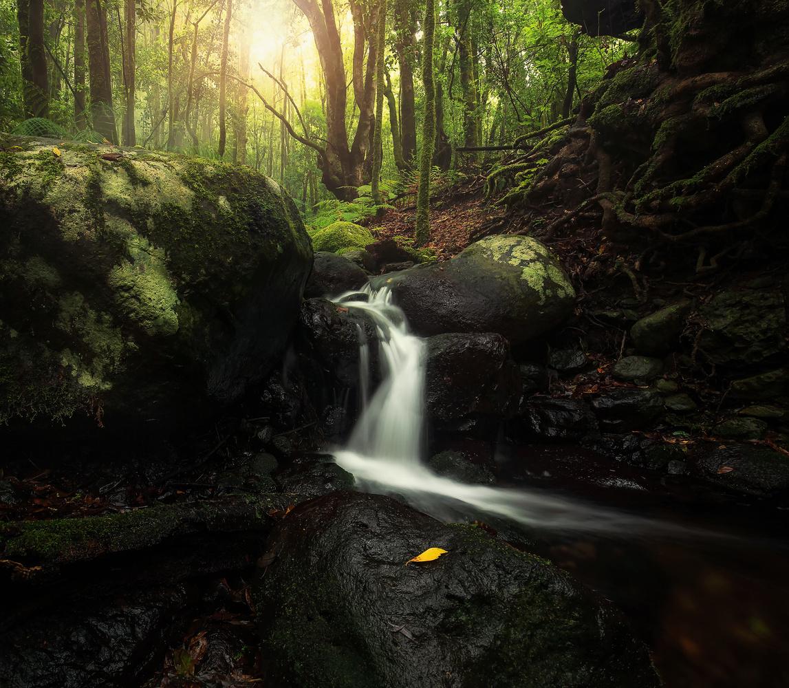 Tenerife's Forest jewel by Geoffrey Gilson