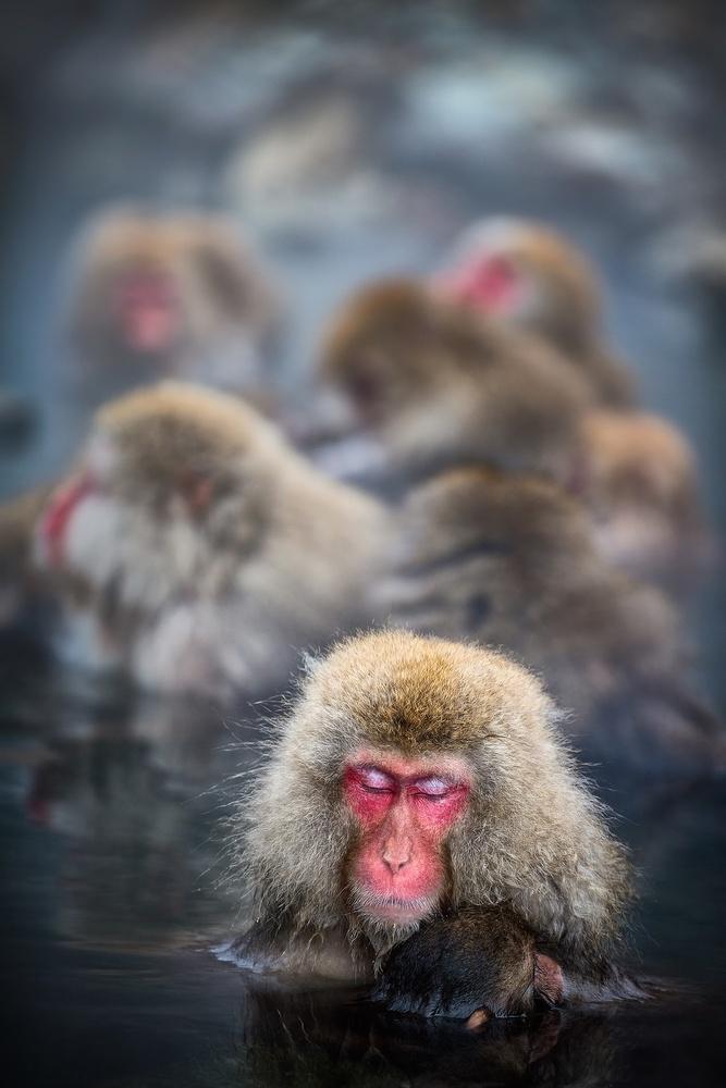 Monkey business by Geoffrey Gilson