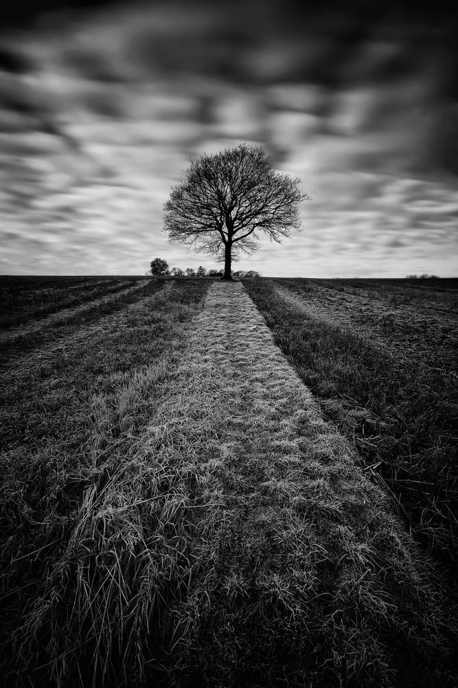 Frozen tree by Geoffrey Gilson