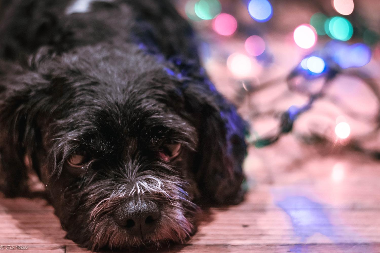 Lazy dog by Eric Felipe