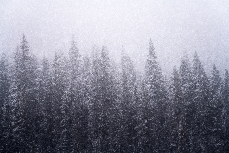 Snow Fall by Daniel Gomez