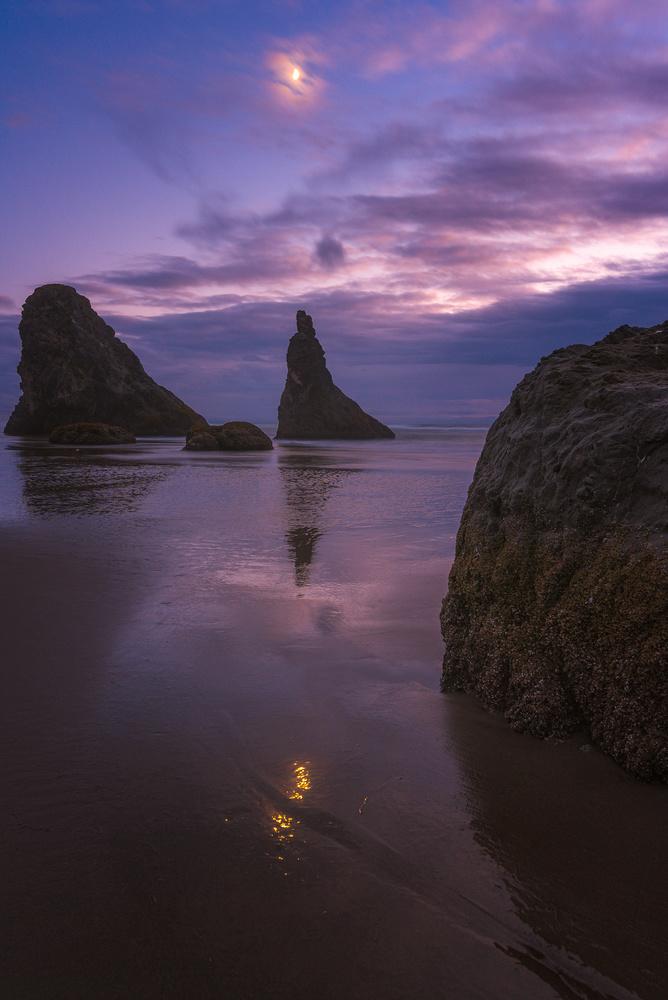The Wizard of the Coast by Daniel Gomez
