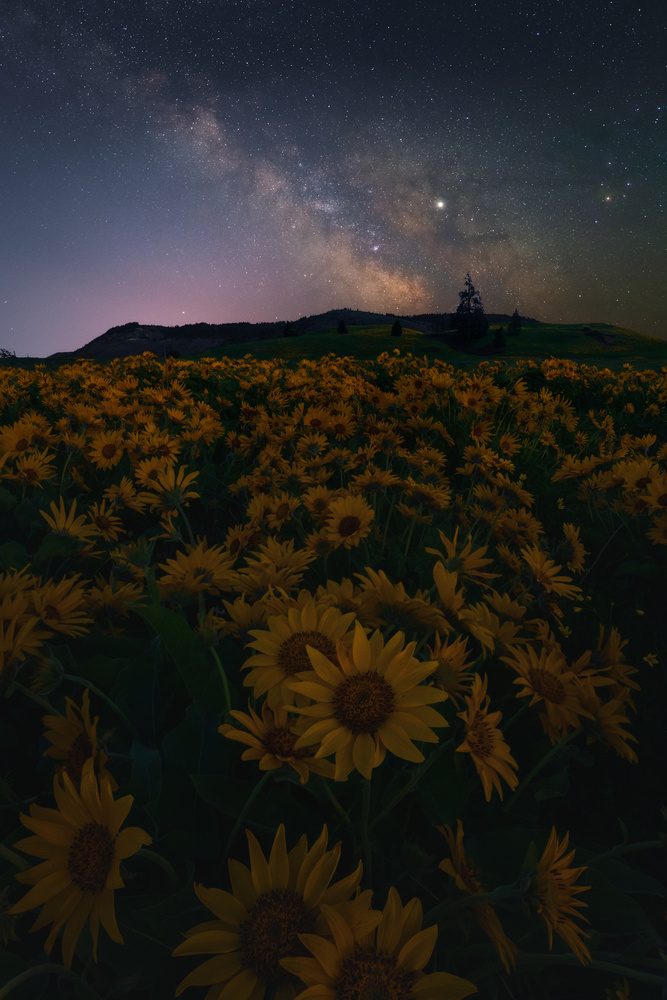 Late Night Blooms by Daniel Gomez