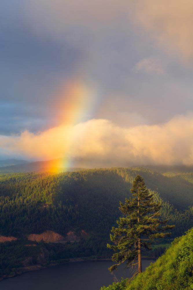 Lone Tree Rainbow by Daniel Gomez