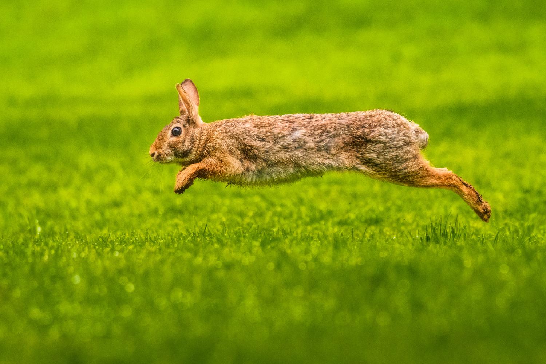 What's Hoppin' by Daniel Gomez