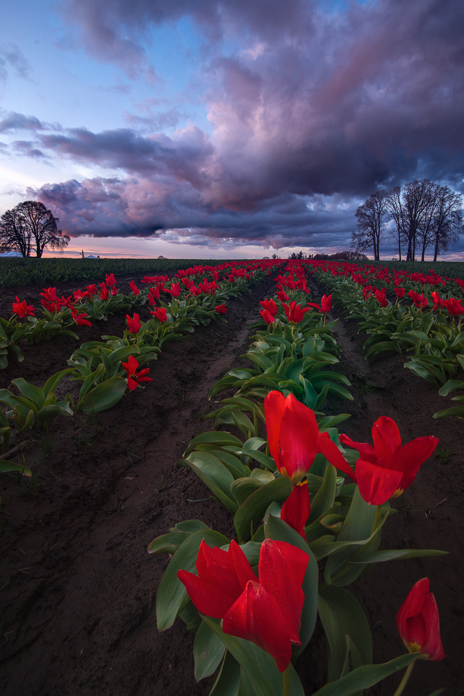 Storms and Blooms by Daniel Gomez