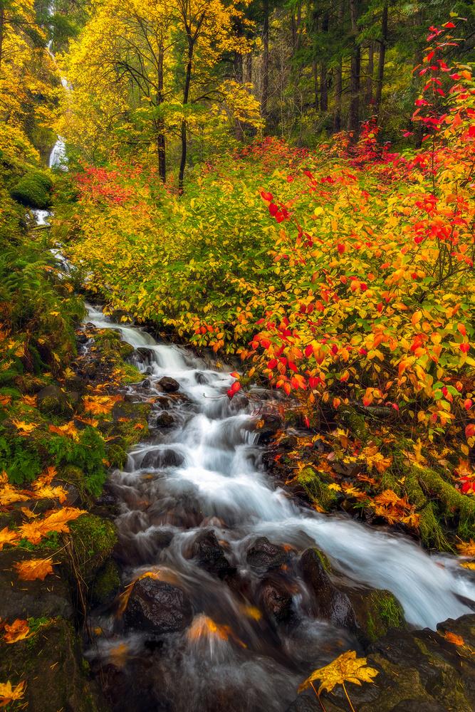 Golden Falls by Daniel Gomez