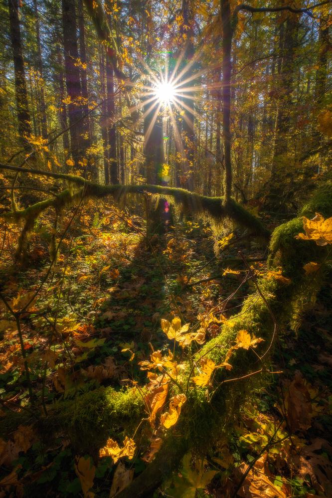 Paradise Forest by Daniel Gomez