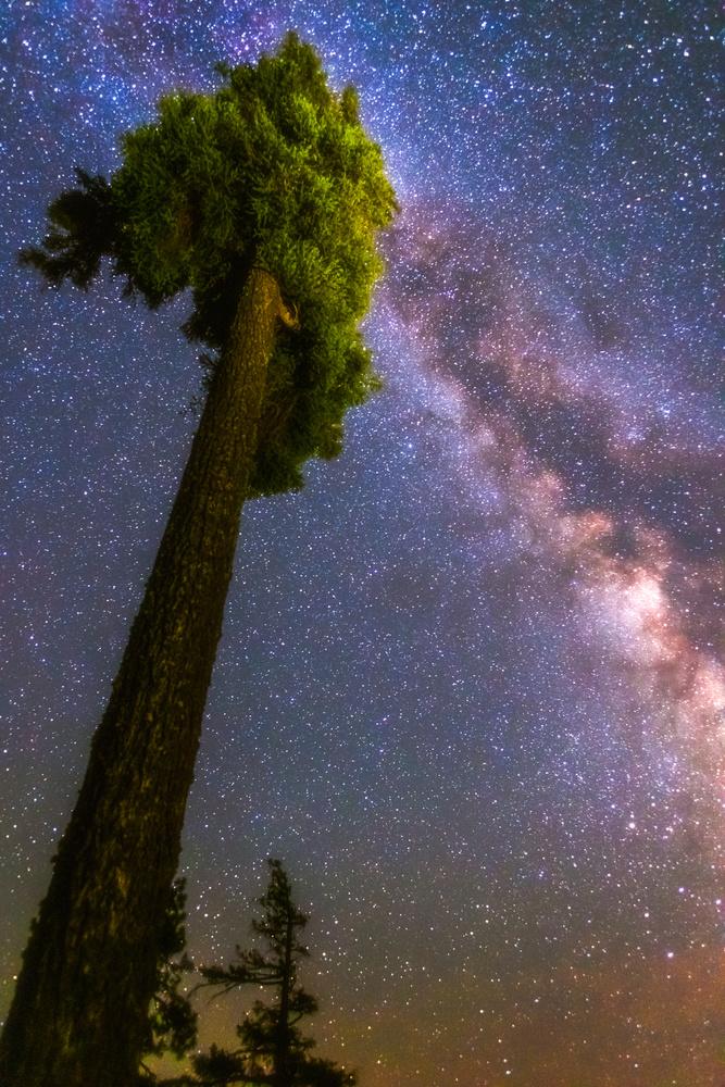 Tree of Light by Daniel Gomez