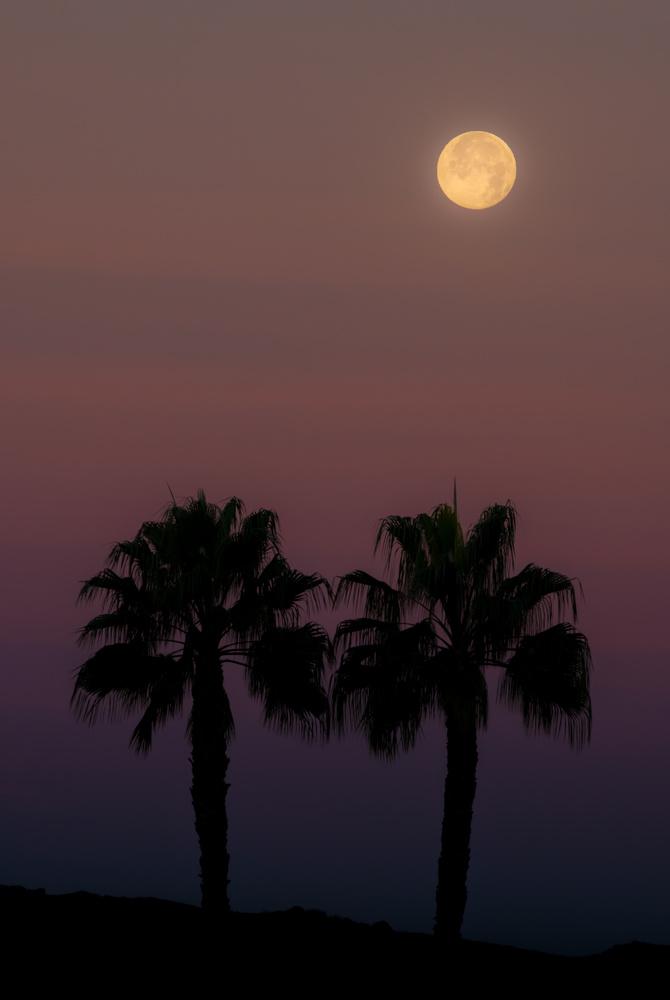 Moon Over Palms by Dan Grayum