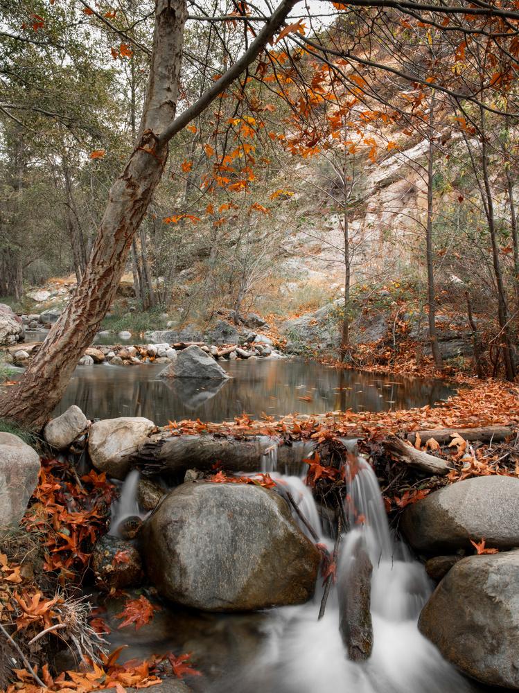 Autumn Stream by Dan Grayum