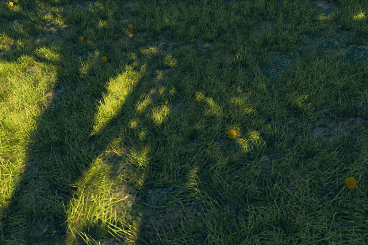 Tree in shadow 2 by Levente Boros
