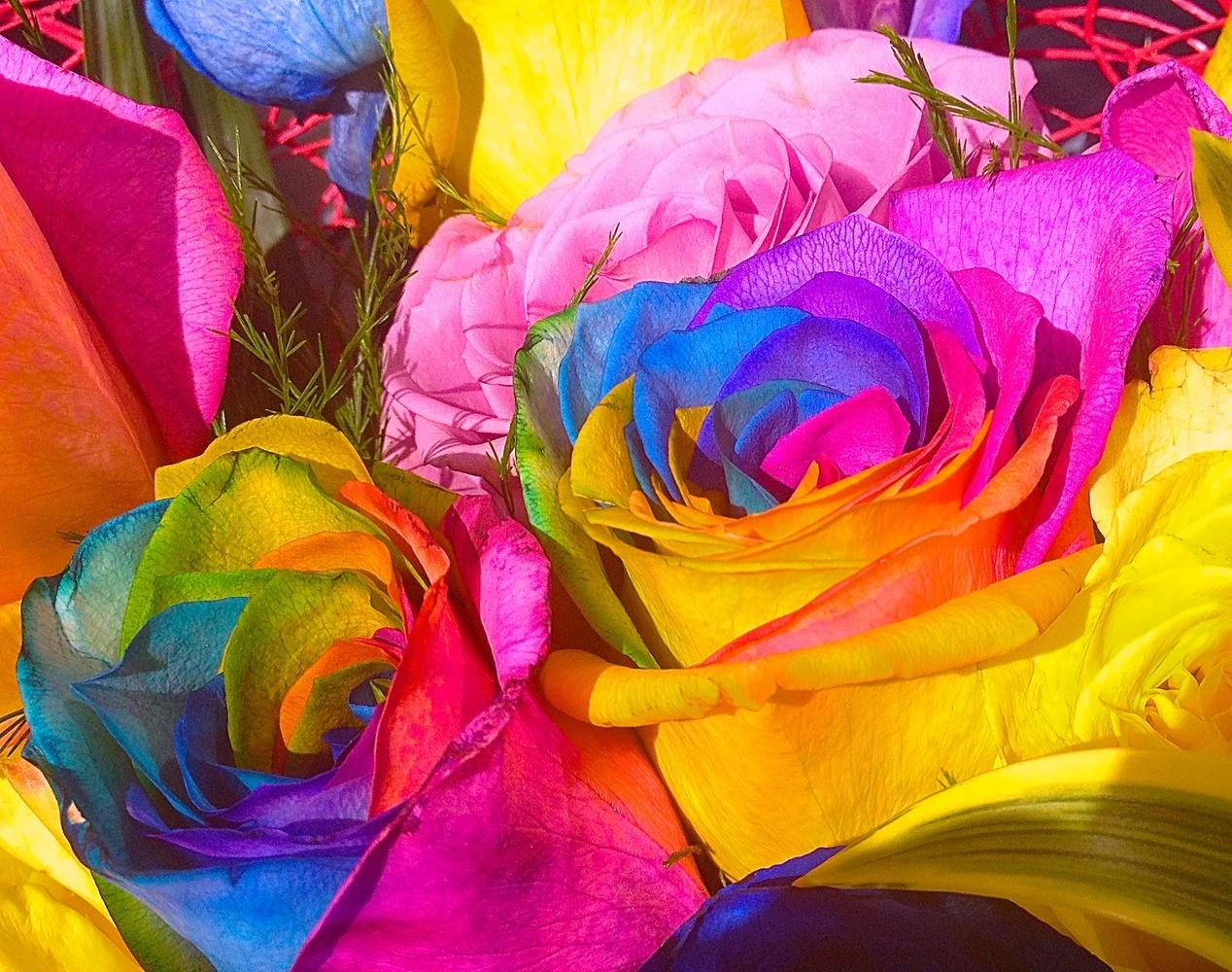 Rainbow Petals by Jessie Jocelyne