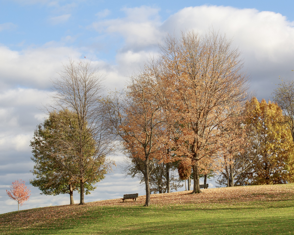 Fall down the Hill by Jason Huppert
