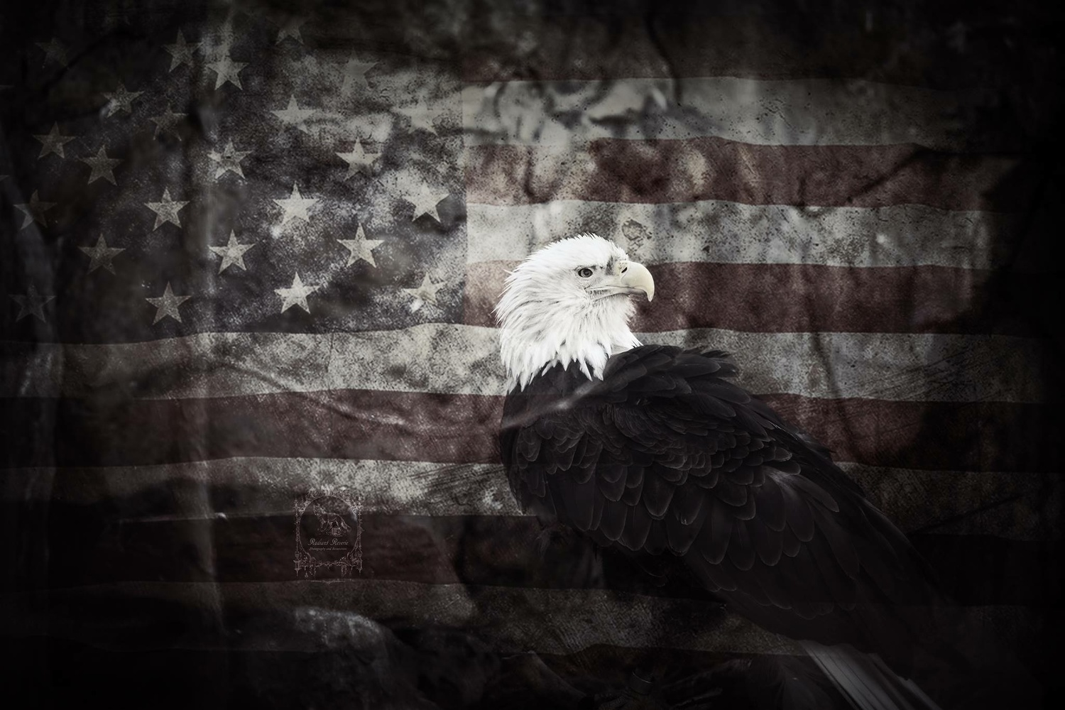 Freedom by Audree Rodabaugh