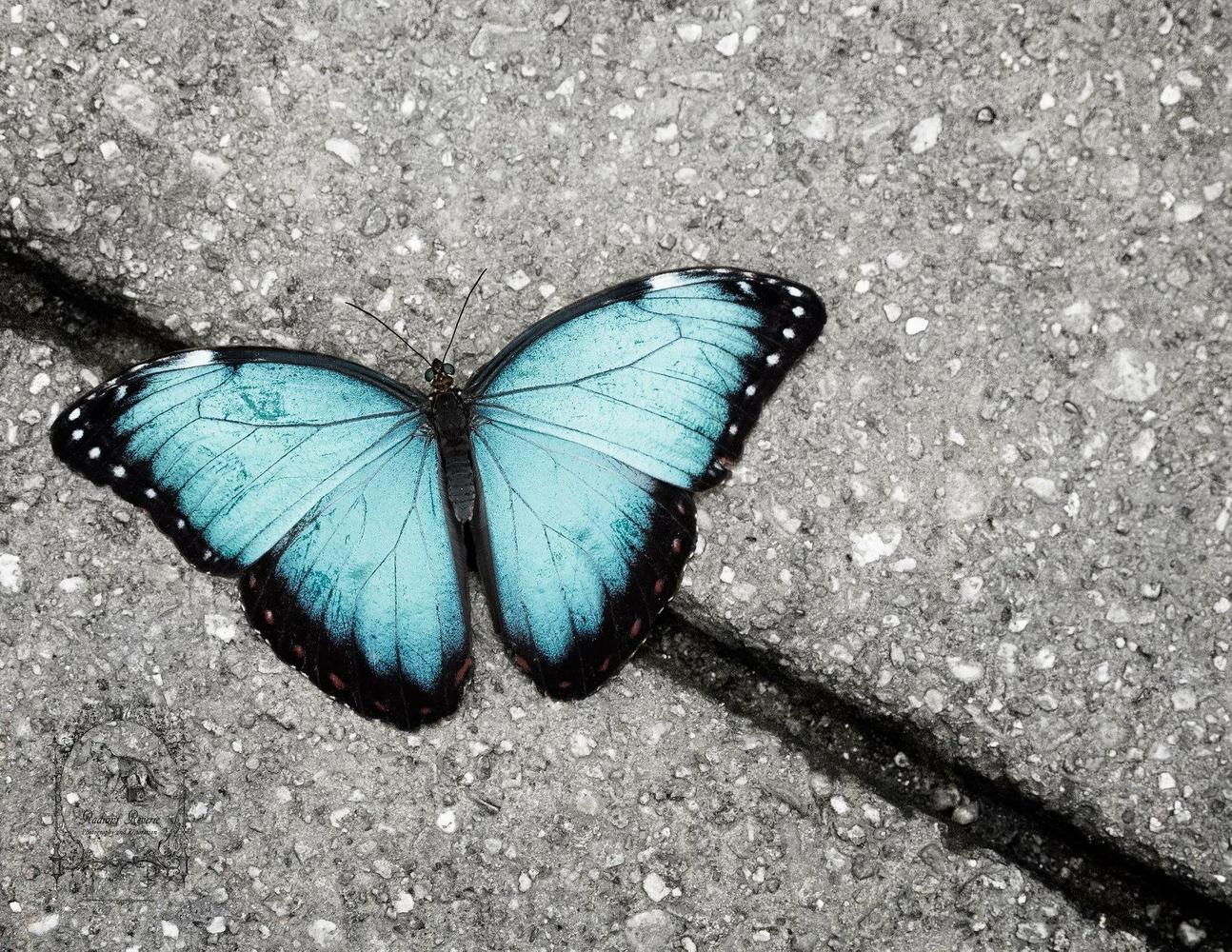 Blue Beauty by Audree Rodabaugh