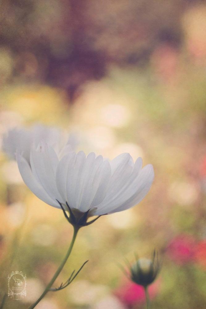 Natural Pastels by Audree Rodabaugh